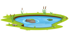 Natural Pond Outdoor Scene