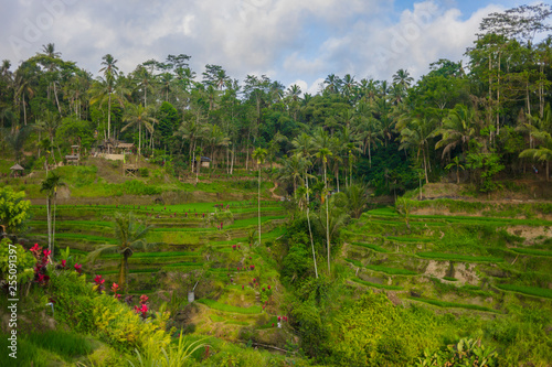 Tuinposter Wijngaard 08-10-2018, Tegallalang Rice Terraces, Gianyar Regency, Bali, Indonesia. Rice Terraces Eco park