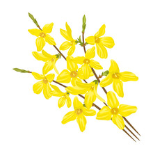 Bouquet Of Twigs With Yellow F...