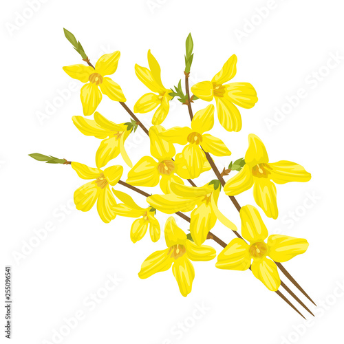 Bouquet of twigs with yellow flowers isolated on white background Wallpaper Mural