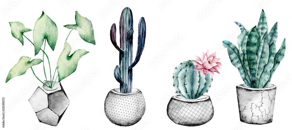 Fototapety, obrazy: Cactus in pot, set watercolor floral illustrations, isolated on white background. Flowers perfectly for posters, greeting cards, stickers, icons. Green, grey, blue, pink colors.