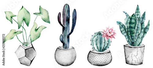 Fotografia Cactus in pot, set watercolor floral illustrations, isolated on white background