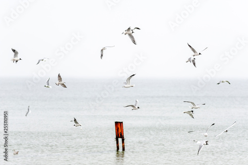 Fototapeta różne gatunki mew nad plażą obraz