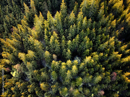 Leinwand Poster Birds eye, aerial view of forest covered with snow