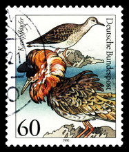 Postage Stamp. Philomachus Agg...