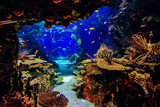 Fototapeta  - aquarium with fish, blurred for background
