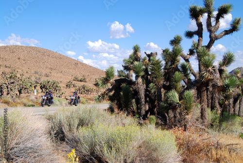 Fotografia, Obraz  motorcycle riding in high desert with joshua trees