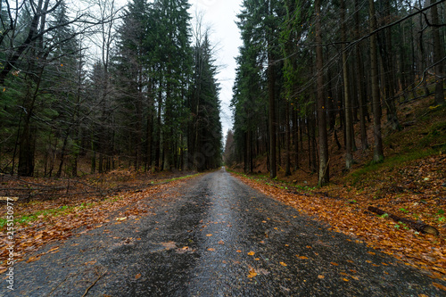 Poster Nature Road in the autumn forest on the slopes of the Krkonose Mountains (Giant Mountains). Czech Republic.