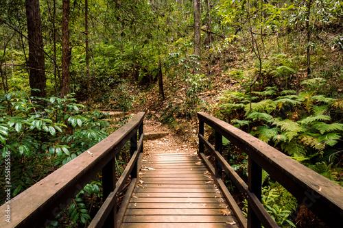 Poster de jardin Route dans la forêt middle