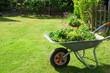 canvas print picture - brouette de déchets verts dans le jardin