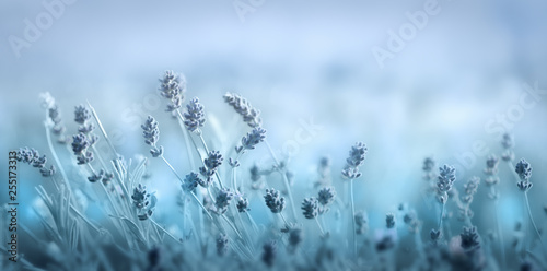 Soft blue spring floral background
