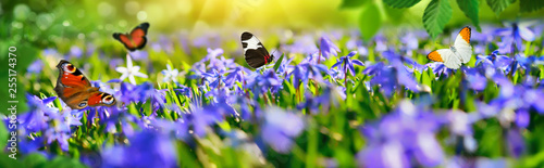 Small paradise with spring flowers and butterflies