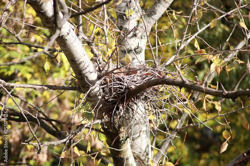 convolute nest on tree Tapéta, Fotótapéta