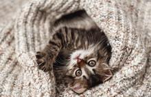 Cute Little Kitten In A Soft B...