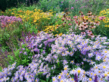 Mixed Perennial Border