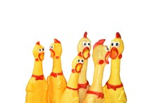 Many Funny Chicken Toy Different Size On Isolated Background.