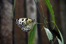 Bright Transparent Butterfly