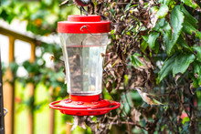 Hummingbird Feeding From A Red And Clear Hummingbird Feeder In Spring, Vibrant Green In Background