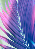 Palm leaf. Tropical plants. Nature background. - 255209722