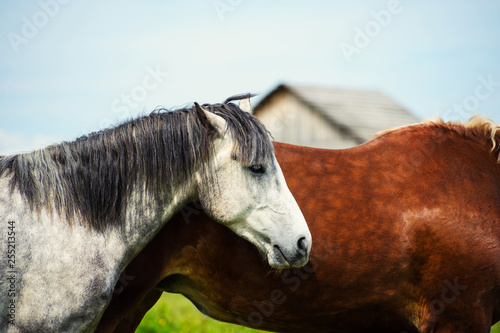 Horse in the pasture, sunny day. Spring time