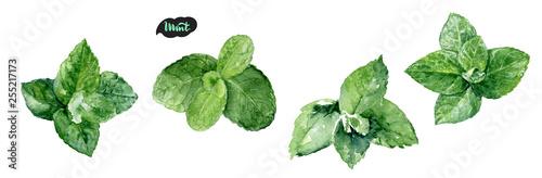 Obraz Watercolor hand drawn mint leaf illustration. Isolated on white. - fototapety do salonu