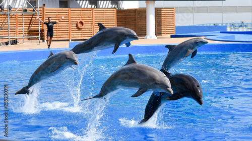Foto op Aluminium Dolfijn Dolphins show in Valencia oceanografic