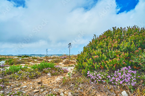 Fotomural The vegetation of Buskett Gardens, Siggiewi, Malta