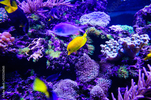 Photo Stands Coral reefs Wonderful and beautiful underwater world with corals and tropical fish.