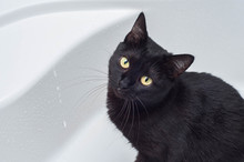 The Black Cat Looks At The Owner, Why Does The Tap In The Bathroom Flow?