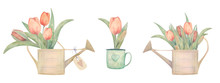 Watercolor Hand Drawn Spring Set With Tulips. For Posters, Cards And Logo