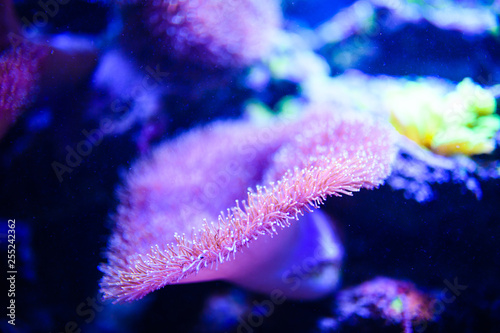 Photo  Wonderful and beautiful underwater world with corals and tropical fish
