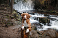 The Dog At The Waterfall. Pet ...