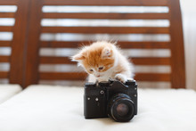 Little Adorable Sunny Fluffy Cute Ginger Cat Plays With A Vintage Camera, Front View/ Light Photography, Kitty Checks The Camera Settings Before Taking A Picture, Handsome Tabby Kitten, Pets Concept.