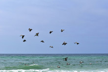 Group Of Pelicans And Seagulls...