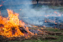 Burning Grass On The Field In Village. Burning Dry Grass In Fields. Wild Fire Due To Hot Windy Weather In Summer