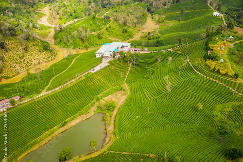 Photo  aerial view agricultural area green tea on the mountain at doi chiang rai Thaila