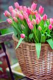 Fototapeta Tulipany - huge bouquet of pink tulips in amsterdam