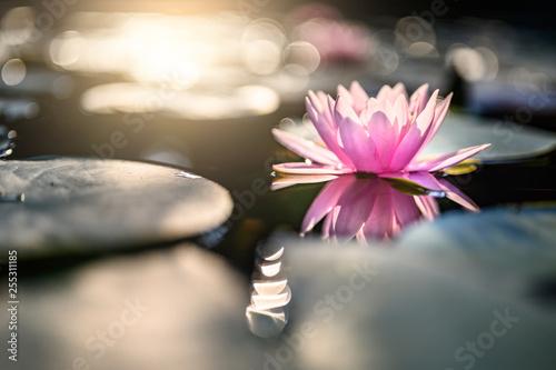 Montage in der Fensternische Lotosblume beautiful lotus flower on the water after rain in garden.