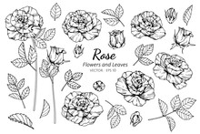 Collection Set Of Rose Flower ...