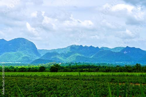 Photo sur Toile Bleu ciel forest landscape view of mountain under sunlight nature background.