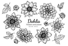 Collection Set Of Dahlia Flowe...