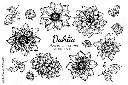 Stampa su Tela Collection set of dahlia flower and leaves drawing illustration.