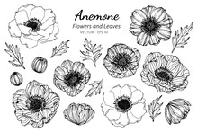 Collection Set Of Anemone Flow...