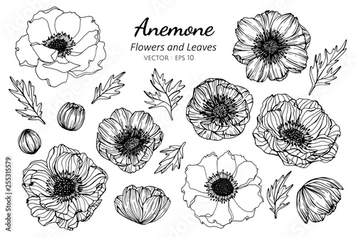 Fotografia Collection set of anemone flower and leaves drawing illustration.