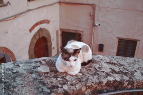 Fotografía  Cat on a wall of Pelago, Tuscany, Italy