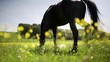 Braunes Pferd istt Gras auf einer Wiese im Sommer