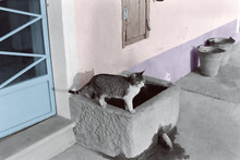 Cat On Well