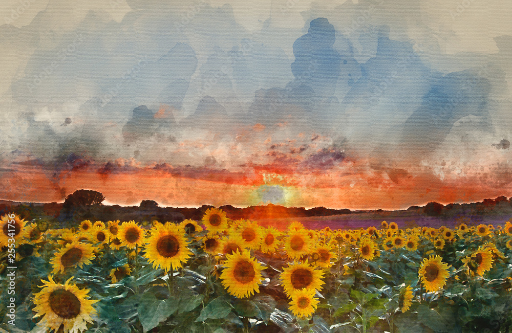 Fototapety, obrazy: Watercolor painting of Sunflower Summer Sunset landscape with blue skies