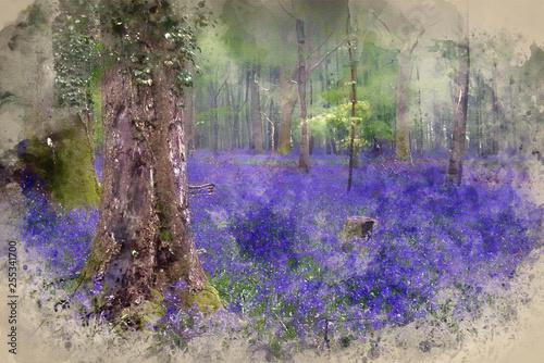 Fotografia, Obraz  Watercolor painting of Vibrant bluebell carpet Spring forest foggy landscape