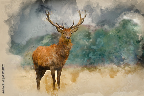 Fotografie, Obraz  Watercolor painting of Portrait of majestic red deer stag in Autumn Fall